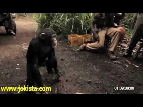 connectYoutube - Funny Monkey Shoots Servicemen