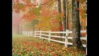 Ne-om scutura ca pomii primăverii - Titel Baruta