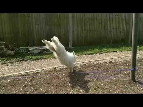 connectYoutube - Dexters majestic leap