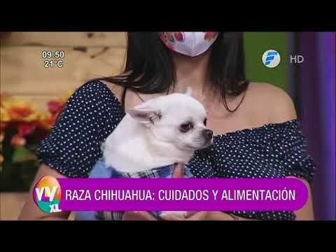 Veterinaria | Cuidados en general de los perros falderos.