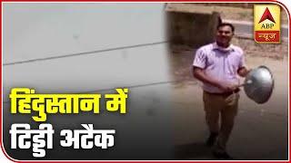 Locust attack troubles farmers across India | Matrabhumi - ABPNEWSTV
