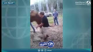 خيل يركل رجل على وجهه