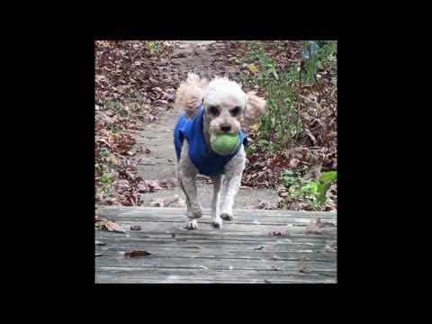 Dog Circular Canter Clockwise