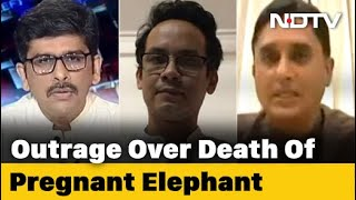 Left, Right & Centre   Elephant Death Unites People In Grief, Netas In Hate - NDTV