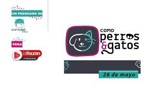 Como perros y gatos: Refugio de Mascotas Laika 26-05-21