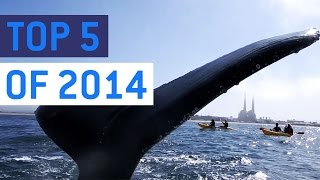 Top 5 Wild Animal Encounters of 2014 || JukinVideo Top Five